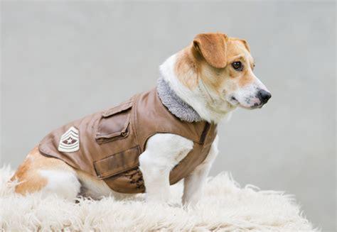 Study My Understanding Of Resources lejandre bulldogs pets lover