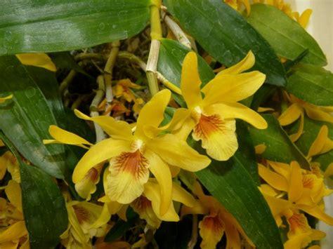 foto fiori piu belli mondo foto orchidee in centro i fiori pi 249 belli mondo 8