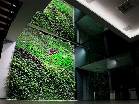indoor vertical garden spain s largest vertical garden cleans air inside office building elche indoor vertical garden