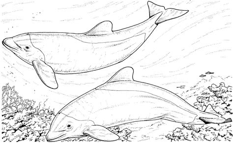 river dolphin coloring page free river dolphin coloring pages