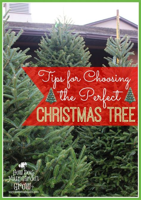 tips for choosing the perfect christmas tree picking out