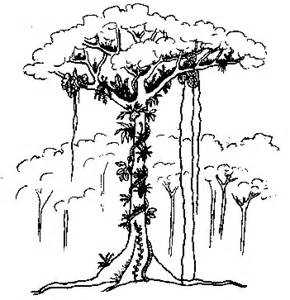 How To Draw  Rainforest Trees Page 2 sketch template