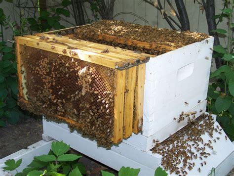 image gallery beekeeper box