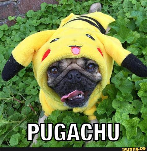 pug pikachu pug ifunny
