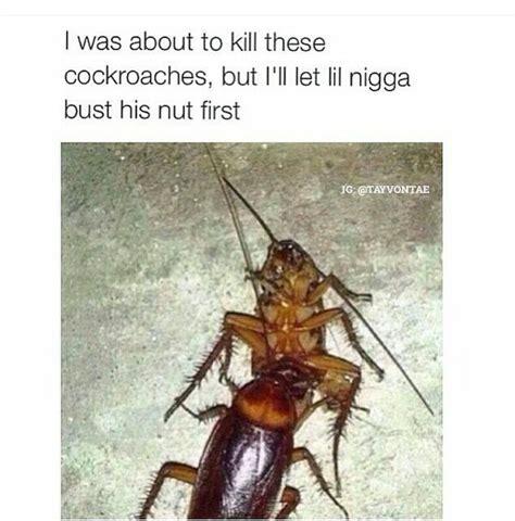 roach meme flying cockroach meme 100 images getsuptokill