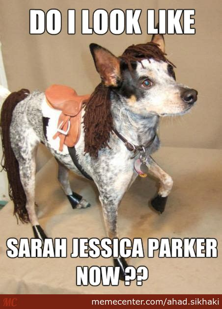 dog squirrel costume meme www pixshark com images