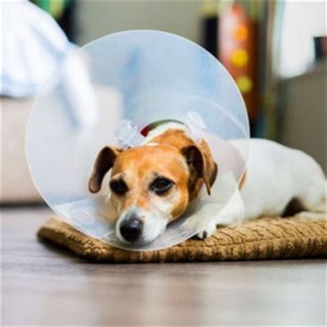 pros and cons of neutering a should i neuter my pros and cons of neutering a