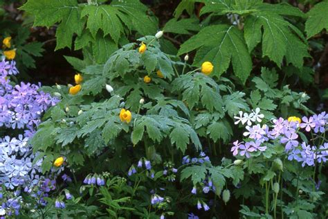 Flowers For Shade Garden What Exactly Is Shade State By State Gardening Web Articles