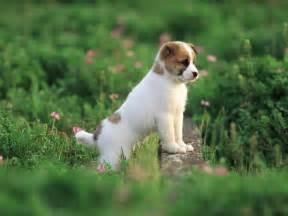 Garden Dogs Pretty In Garden Puppies Wallpaper 13904300 Fanpop