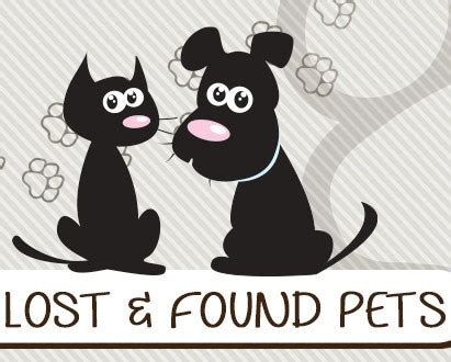 lost and found dogs list to help find lost found petskwhi