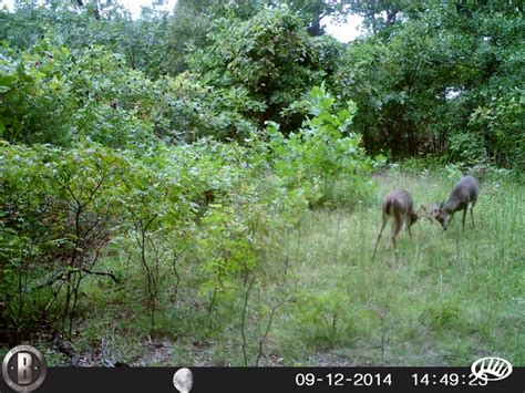 Affordable Hunting Tract With Good Access and Nice Timber In Southwest MO   Whitetail Properties