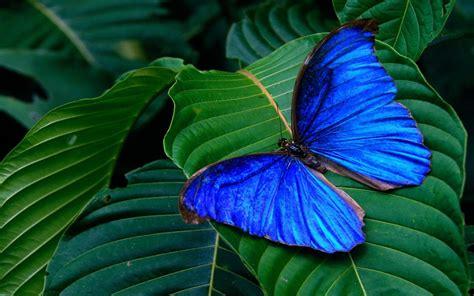 imagenes mariposas para descargar gratis mariposas wallpapers gratis imagenes paisajes