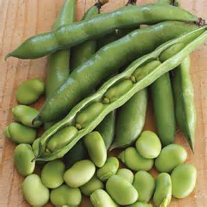 Flower Basket Broad Bean Robin Hood Seeds From Mr Fothergill S Seeds And Plants