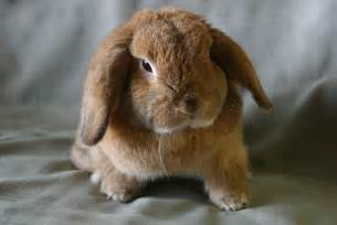 Small Animals Free To Home File Lop Jpg