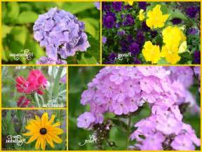 summer flowers with names
