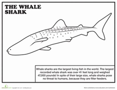 coloring page of whale shark whale shark worksheet education com