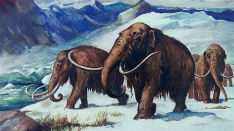 animal during great ice age humans climate change together felled ice age giants