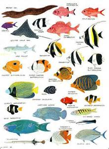 ANGELFISH, DAMSELFISH AND OTHER COLORFUL REEF FISH   Facts and Details