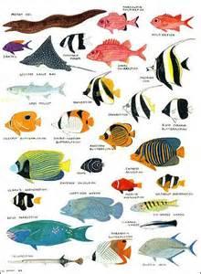 20120517 Reef Fish5