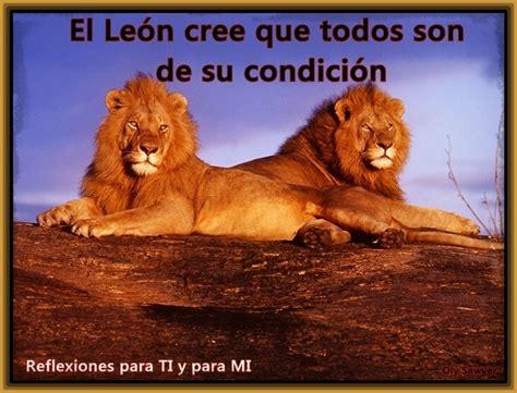 imagenes de leones con frases de amor imagenes de leones y frases imagenes de leones con frases