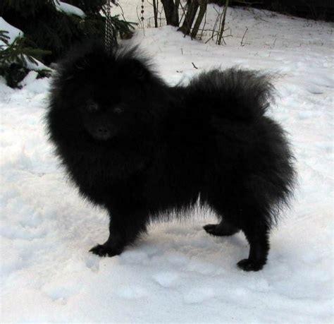 puppies for sale in brunswick ga craigslist brunswick ga pets autos post
