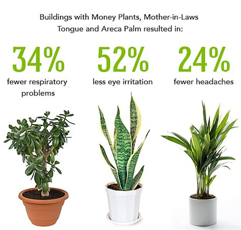 best houseplants for air quality 26 best indoor plants for your home