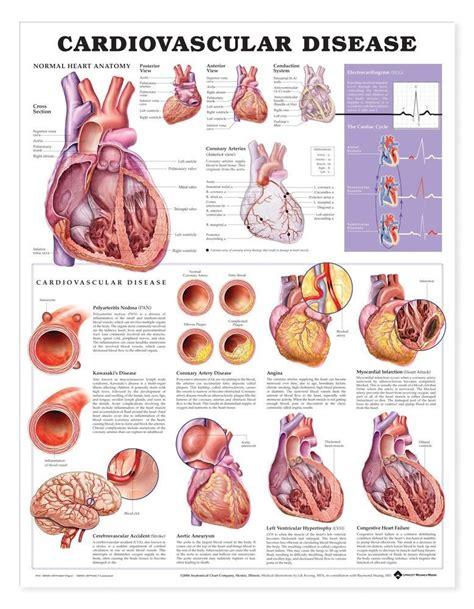 hearts and sharts anatomy chart cardiovascular disease