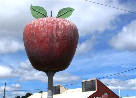 apple australia photo essay 10 really big fruits in australia