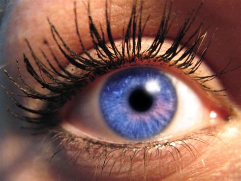 what is the most common eye color eye color eye colors common and uncommon types