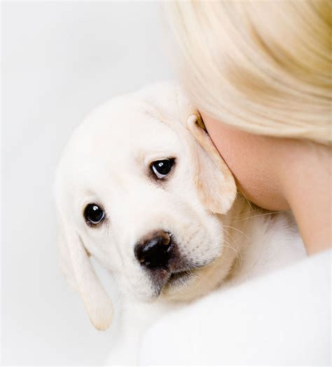 why do dogs always want food 7 reasons why dogs humans understand the