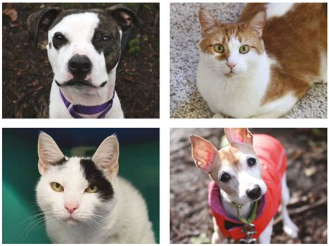 seattle humane dogs at seattle humane 7 000 dogs and cats get new homes every