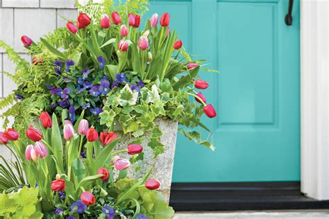 pansy garden ideas tulips pansies acorus heuchera and fern