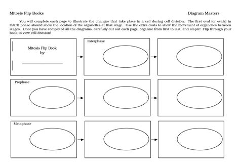 mitosis flip book pictures uncategorized stages of mitosis worksheet