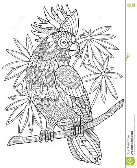 z coloring book for and adults 40 illustrations books cockatoo parrot coloring book for adults vector