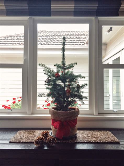 winter indoor plants bring joy  promote wellness