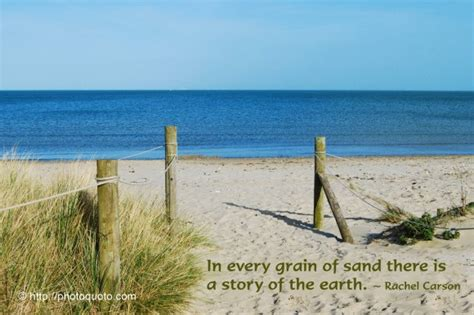 whole grains quotations quotes about grain of sand sualci quotes