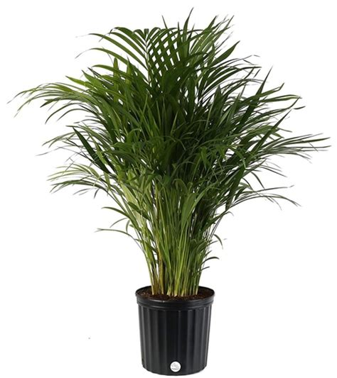 plantas de interior  purifican el aire de tu hogar
