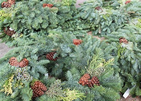 eastern market detroit christmas tree how green is your tree sustainable tips huffpost