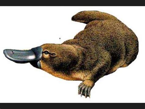 imagenes de animales ovoviviparos lista animales ovoviv 205 paros