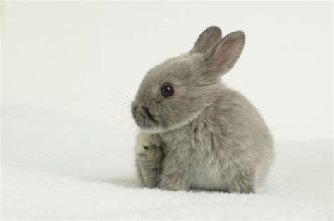 12 of the Cutest & Smallest Breeds of Rabbits in the World