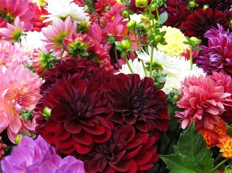 Flowers Garden Grove September Flowers Shady Grove Gardens Nursery Florist And Flower Farmers 828 297 4098