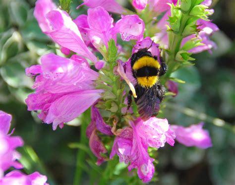 immagini di ci di fiori foto fiori piu belli mondo