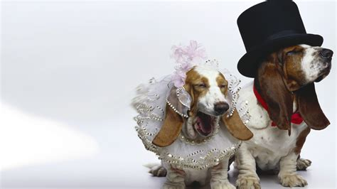 hd wallpapers 1920x1080 dogs download 1920x1080 hd wallpaper dog bride dress wedding