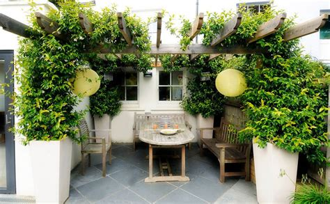 Patio Pergola Designs Perfect For The Upcoming Summer Days Plants For Pergola