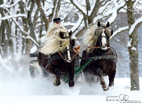 christmas horse wallpaper   wallpapersafari