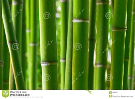 imagenes zen bambu bosque de bamb 250 fotos de archivo imagen 2652303