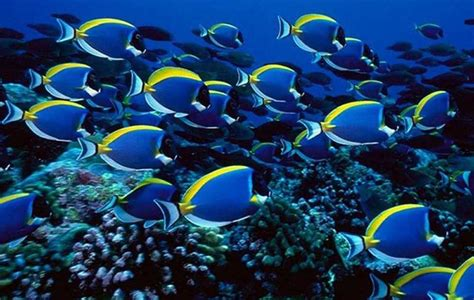 Sea Life Home Decor by Most Colorful Freshwater Tropical Fish Quotes
