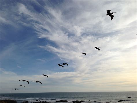 bird relaxing in blue sky photo page everystockphoto free images beach sea coast ocean cloud wave