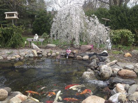 backyard pond maintenance rochester ny acorn ponds