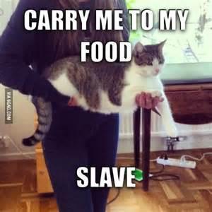 Funny Fat Cat Memes - funny fat cats dump a day